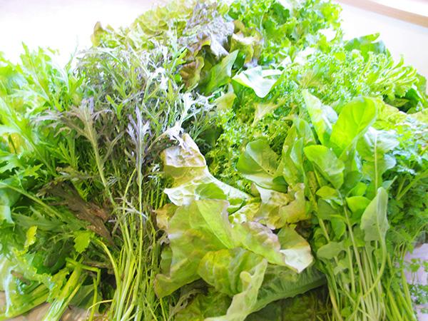 地元裏磐梯の朝どり野菜