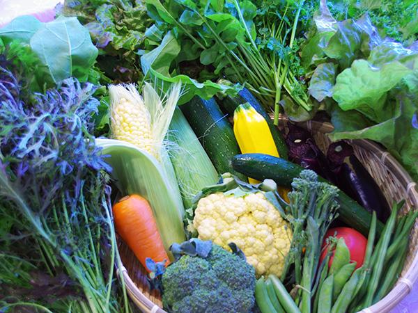 会津の旬の野菜